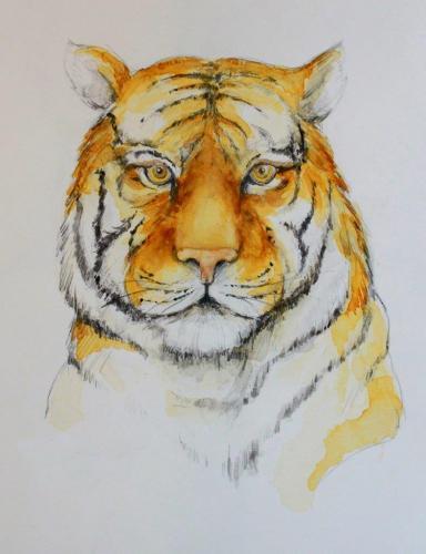 Tiger (colorierte Zeichnung) HOPP´s MAL Kunstschule